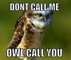 Owl call you.  Haha.