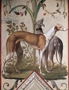 Two Greyhounds, 18th century mural by Pietro Rotati (Italian, ca.1770–90). Located in the Galleria Borghese, Rome
