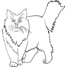 Coloriage Chat Maine Coon.Maine Coon Cat Coloriage Coloriage