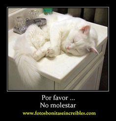 Una colección de fotos con los gatos más feos del mundo. Gatos chistosos Gatos locos Gatos que hablan Gatos feos.