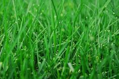 The Best Grass Seeds for Shady, Wet Areas | eHow  2 types