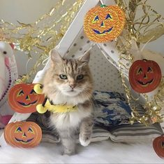 Cat in the pet teepee decorated for Halloween. Trick or treat? Dog&teepee is more than a pet bed. Perfect cozy place for your cat, dog, guinea pig and hedgehog. Bed Tent, Teepee Tent, Cat Teepee, Cozy Place, Guinea Pigs, Dog Bed, Dog Pictures, Trick Or Treat, Fun Things