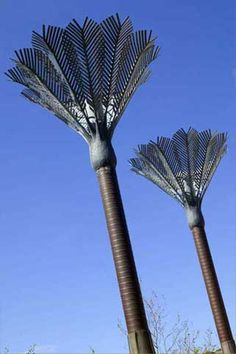 wellington art icons - GOOD THING TO INCORPORATE IN BACKGROUND Nikau Palms