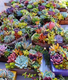 Beautiful succulent planters