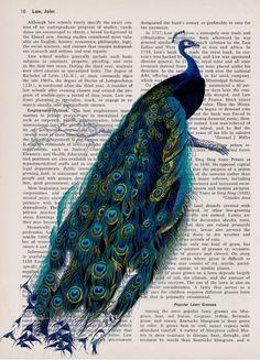 Stunning Peacock Vintage Dictionary Art Print