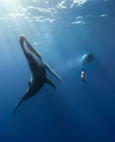 A timeless moment! 🐋 Photo by: . 🐳 Tag someone who should see this! Ocean Underwater, Underwater Creatures, Ocean Creatures, Humpback Whale, Killer Whales, Nature Animals, Ocean Life, Marine Life, Under The Sea