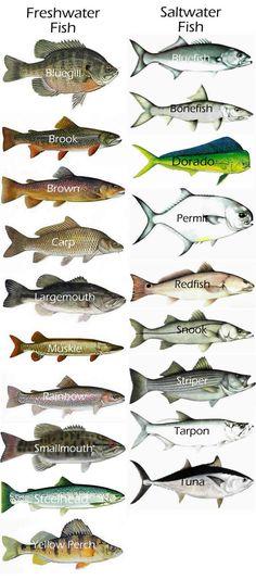 gamefish - Google Search Fresh & Saltwater                                                                                                                                                      More