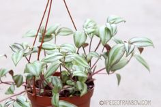 12 easiest indoor plants that purify air | A Piece of Rainbow