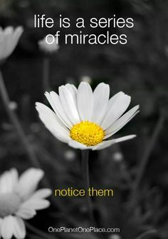 Mitaclrs