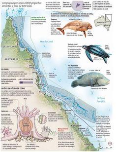 Climate change and the Great Barrier Reef, by La Vanguardia (Spain)