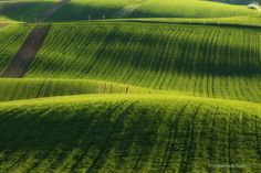 Did you think you have to go to Tuscany to photograph wavy fields, picturesque vineyards, rolling hills? No we have it in Czechia as weel ; Heart Of Europe, Green Fields, Czech Republic, Tuscany, Vineyard, Scenery, Tours, Explore, Vacation