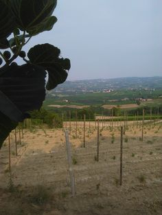 estate sulle Langhe #AlbaInLanghe #Langhe
