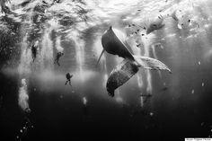 """National Geographic Traveler Photo Contest 2015, """"Whale Whisperer"""" limmagine mozzafiato che ha vinto il concorso (FOTO)"""
