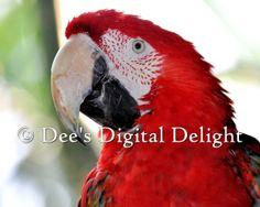 Parrot  8x10 Horizontal Photo Print Buffalo by DeesDigitalDelight, $20.00