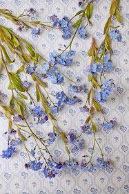 Forglemmegei er min klare favoritt blant sommerblomstene....det er noe med den magiske blåfargen som alltid har betatt meg :) I dag byr j...