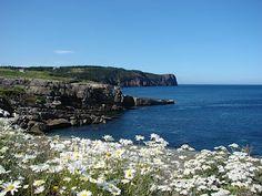 Flatrock! Newfoundland, Places, Water, Outdoor, Gripe Water, Outdoors, Outdoor Living, Garden, Lugares
