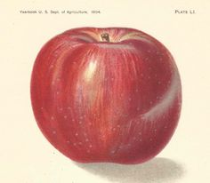 1904 Antique Apple Print Lithograph Book Plate Original Doctor Apple by catladycollectibles on Etsy