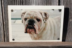 Bulldog in Snow Blank Note Card Animal Photography by HBBeanstalk, $3.00