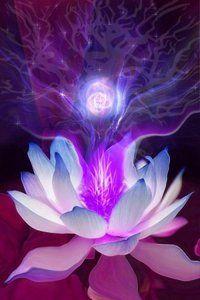Lotus #buddha