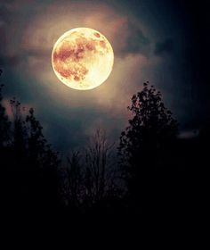 Image shared by Pretty When I Cry ♛. Find images and videos about sky, night and moon on We Heart It - the app to get lost in what you love. Stars Night, Stars And Moon, Sombra Lunar, Luna Moon, Moon Dance, Shoot The Moon, Moon Magic, Moon Rise, Beautiful Moon