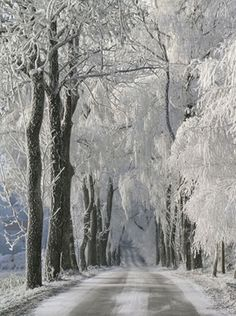 snowy road wall mural <br> evolution 2 by dixons