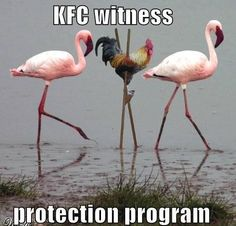 Protection | Funny Pictures!
