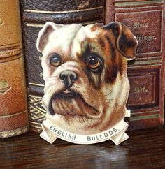 Antique English Bulldog Die Cut Scrap  In Antique as found condition - see photos for condition  Measures 2 x 2 1/2 Check out my other 2 Etsy