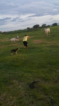The cows 😂 Cows, Sports, Animals, Animales, Animaux, Sport, Animal, Animais