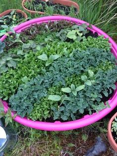 Charming See The Reasons And Ideas As To Why We Will Expand Our Garden Using Kiddie  Pools