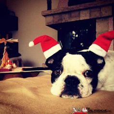 Frida der kleine Weihnachtsengel