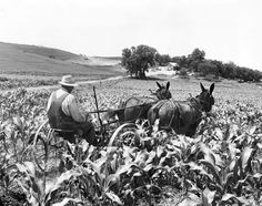 In the summer of 1964, John Wrich was 73 years old. He was still farming the way he had 62 years before, using a team of mules and manure for fertilizer. His Washington County farm was one mile west of Blair. THE WORLD-HERALD