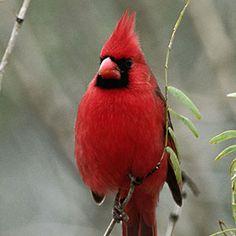 Groundcovers that Attract Birds: Organic Gardening