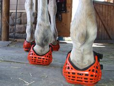If you choose to use ride in any type of hoof boots then you need to prepare your horse for the eventuality that one or more may come off during an endurance ride.  Many horses will react adversely...