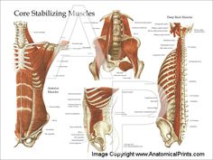 Core Stabilizing Muscles Chart great anatomy lesson if you are curious...