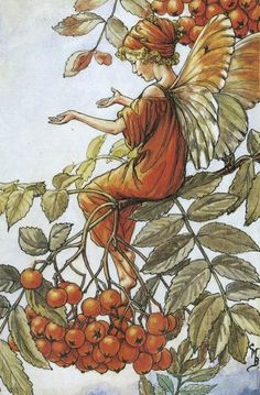 The Mountain Ash Fairy - by Cicely Mary Barker