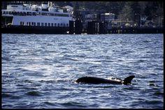 Washington State Ferry & friend