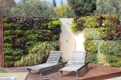 Living Wall, Los Altos Hills, CA - contemporary - landscape - san francisco - JKT Associates, Inc.