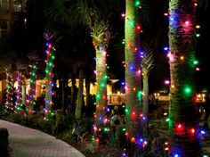 Miller Lights decorates many hotels, town centers, restaurants, Housing developments and resorts for the holidays.  Sometimes businesses want colored lights instead of the typical white lights. Click on pin to find out about our services.