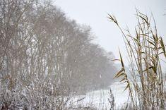 Cañas y nieve