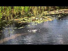 Como hacer una piscina natural - Urbanarbolismo