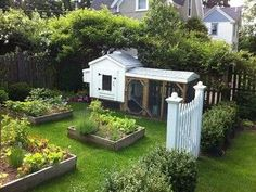 This once empty yard was transformed with perennial gardens, raised garden beds, a cute chicken coop, and boxwood hedge with a garden gate. The raised beds are
