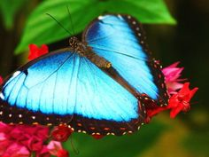 motýl tapeta