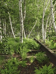 Birch Trees: 5 Favorites to Plant in a Landscape On New York City's High Line park, a leafy glade of Robert Frost, Forest Garden, Woodland Garden, Garden Trees, Modern Landscaping, Backyard Landscaping, Landscaping Ideas, Landscaping Borders, Landscape Design
