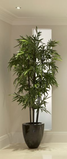2 Easy Ways to Care for an Indoor Bamboo Plant - wikiHow | Garden ...