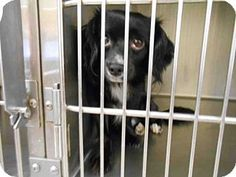Fort Myers, FL - Dachshund Mix. Meet SPARKY, a dog for adoption. http://www.adoptapet.com/pet/16966123-fort-myers-florida-dachshund-mix