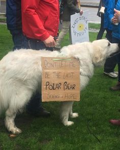 Some of the dogs called for a stop to climate change. Science March Signs, March For Science, From Software, Dog Signs, What Happens When You, Revolutionaries, I Love Dogs, Climate Change, Best Dogs