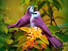 Pássaros lindos.  Birds