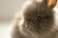 <3 Do you know why they use bunnies to test cosmetics? it's because bunnies don't have tear ducts so they can't cry out the stuff they jam into their eyes, no matter how much it hurts or burns.  Please don't buy cosmetics that are tested on animals ~ it's not necessary.  In fact, the entire European Union just banned cosmetics tested on animals (starting 3/12/13) - and we should too! <3 (list attached)