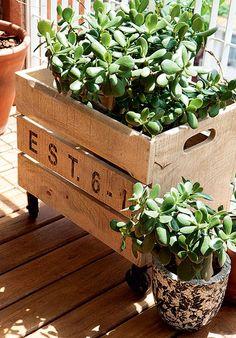 A caixa de madeira com rodízios lembra um caixote de feira e esconde o vaso da suculenta. O suporte é de fácil locomoção na varanda do arqui...