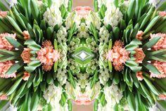 succulent symmetry.